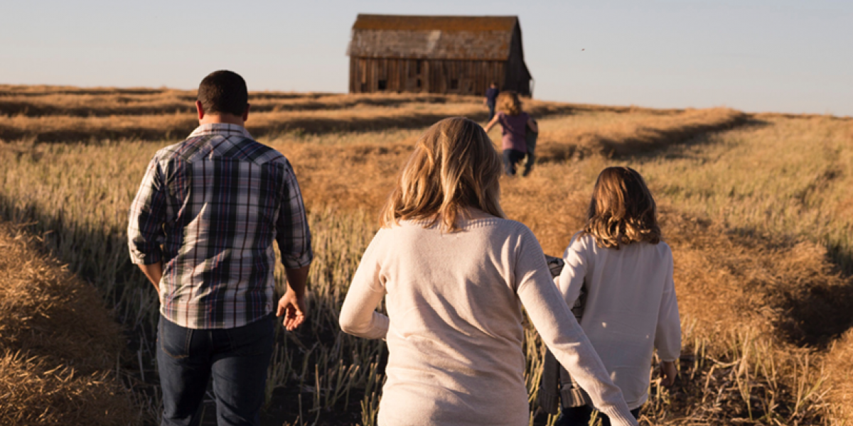 View from behind of a family walking through a wheat field toward a barn.