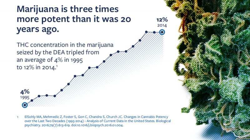 Infographic explaining that marijuana is has increased in potency from an average 4% concentration of THC in 1995, to 12% in 2014.