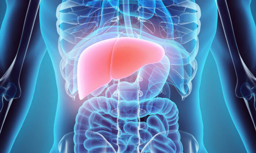 Stylized x-ray image of a human torso with an inflamed liver.